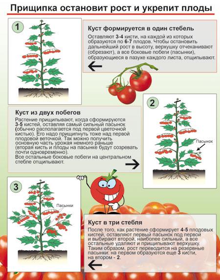 Этапы прищипки томатов