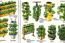 Варианты размещения вертикальных посадок клубники