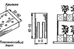Схема авторастильни земляники
