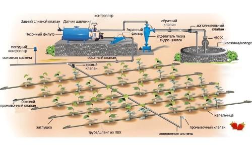 Схема устройства капельного полива