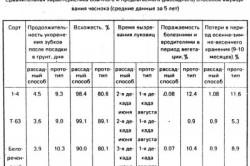 Сравнительные данные при выращивании чеснока методом выгонки