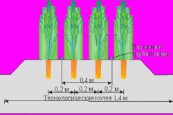 Схема посева моркови четырехстрочным ленточным способом