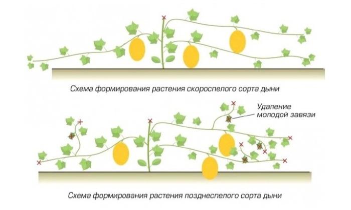 Мир комнатных растений Занятие по познавательному