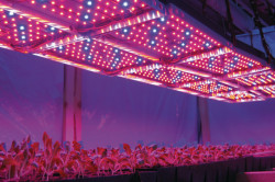 Светодиодные лампы в теплице
