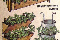 Схема видов пирамид для выращивания клубники