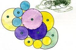 Сочетание цветочных растений по окраске