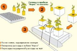 Выращивание семян розы на гидропонике
