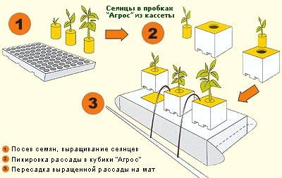 Выращивание розы на английском 9