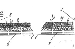 Схема культуры растений в субстрате