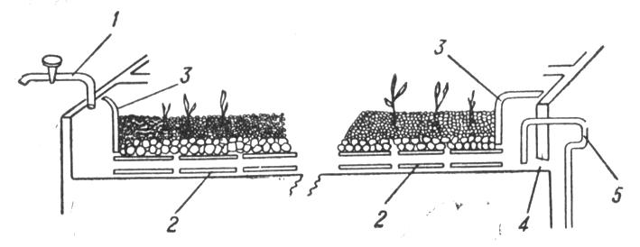 Схема культури рослин у