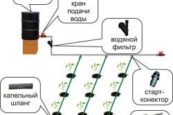 Схема полива под каждое растение