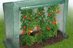 Мини-парник для выращивания томатов