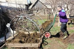 Самым хорошим удобрением для огурцов является навоз. Он содержит все необходимые компоненты, необходимые для роста растений.