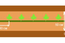 Однострочная схема посадки арбузов
