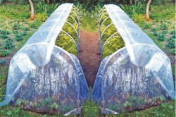 Парник-огуречник для выращивания рассады.