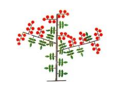Схема формирования супердетерминантных томатов в 3 стебля.