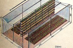 Схема пленочной теплицы для клубники
