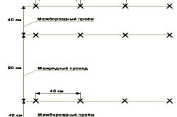 Примерная схема посадки семян