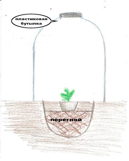 Схема высадки рассады арбуза в
