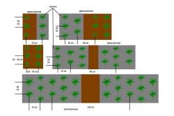 Схема посадки кубники