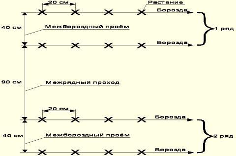 Схема посева семян огурцов.