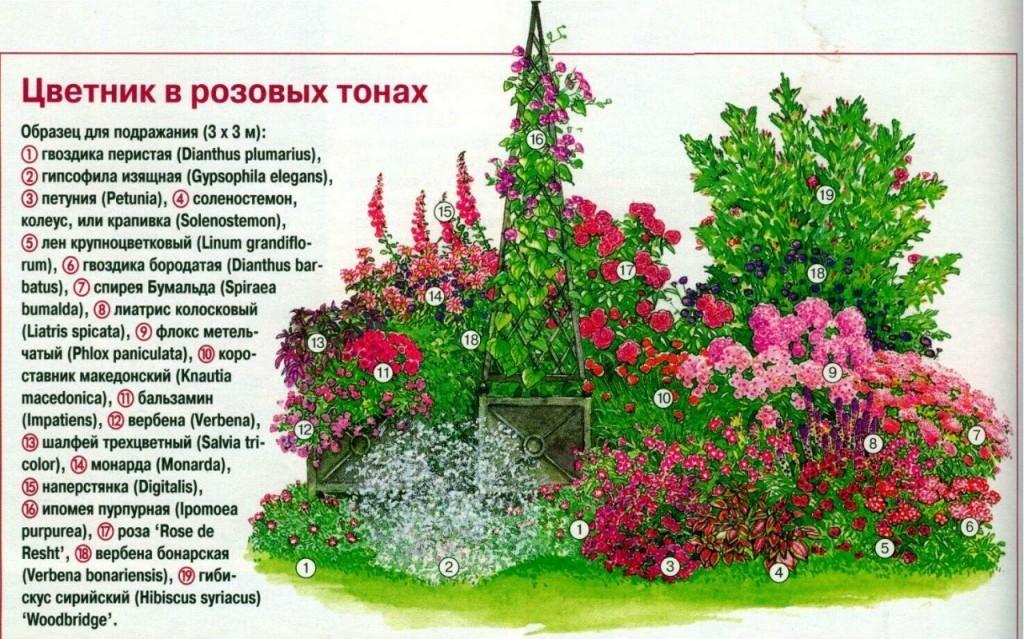 Схема посадки цветов на даче