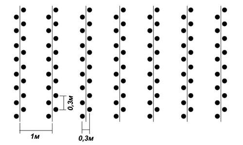 Схема лунок по Митлайдеру