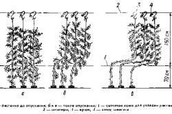 Подвязка растений томата на подвижной шпалере.