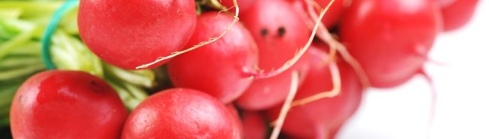 Посадка и выращивание редиса
