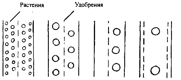 Схема размещения растений и