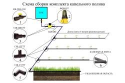Установка и сборка капельного полива