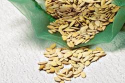 Семена огурцов, как почти и все другие, перед посевом лучше обработать.