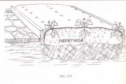 Схема мульчирования земляники