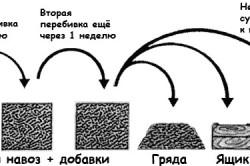 Схема подготовки компоста для шампиньонов