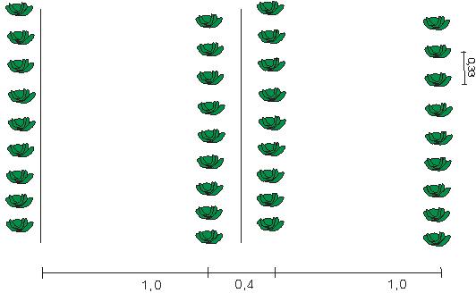 Схема высадки капусты