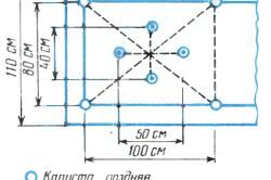 Схема посадки капусты в открытый грунт