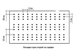 Схема посадки лука-порея на грядке