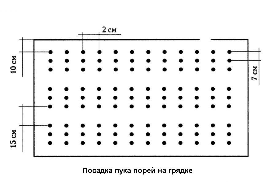 Схема посадки лука-порея на