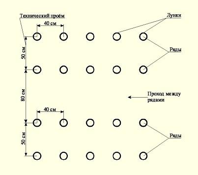 Схема посадки семян дыни
