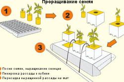 Схема проращивания семян