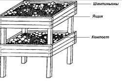 Схема выращивания шампиньонов в ящиках.