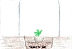 Схема высадки рассады арбуза в парник