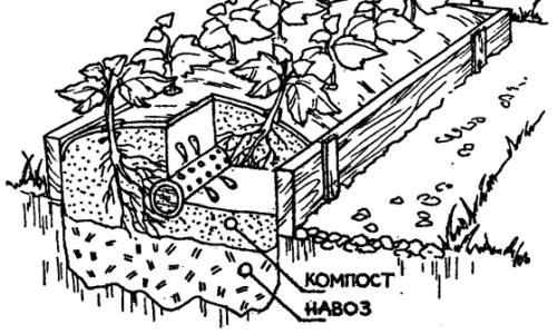 Схема посадки растений в грядку-короб