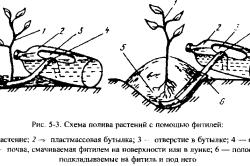 Схема полива растений с помощью фитилей.