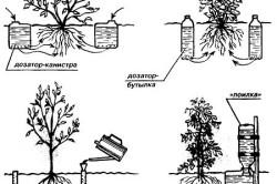 Капельный полив растений в теплице