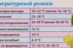 Таблица температурного режима выращивания огурцов.