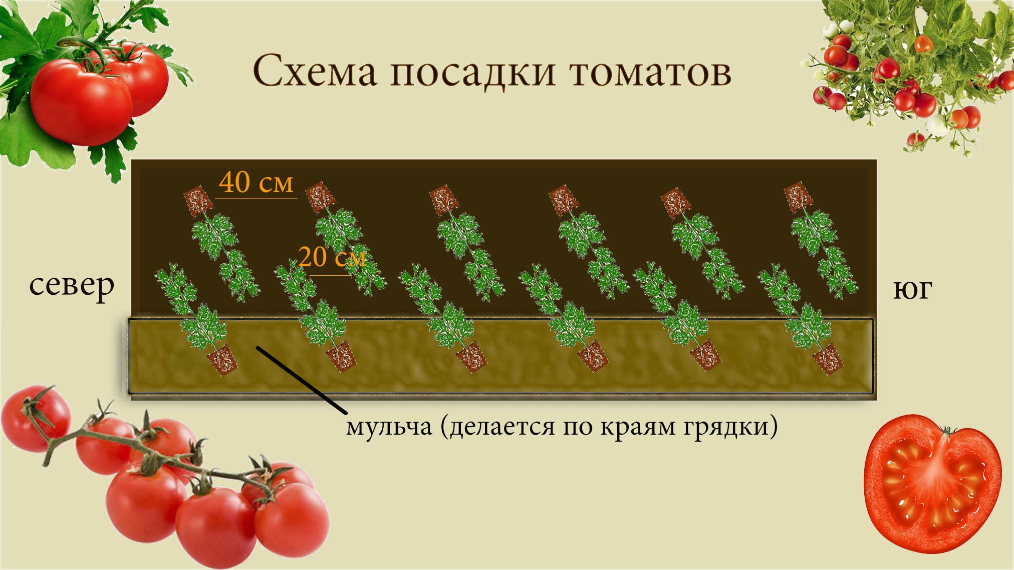 схема посадки земляники садовой по митлайдеру