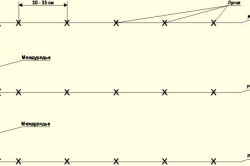 Схема посадки дыни в грунт.