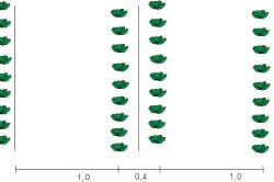 Схема семян для посадки поздней капусты.