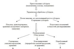 Таблица выращивания вешенок в теплице